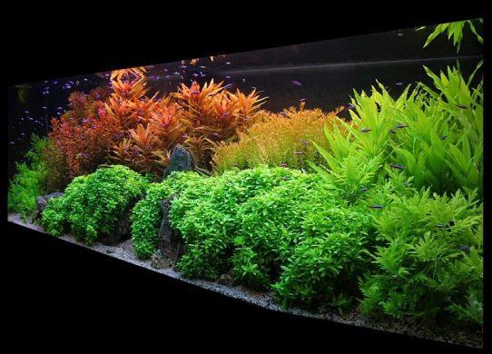 Engrais de haute qualité pour aquarium