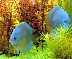 fish-1310689_1280