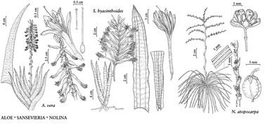 Planche de différentes espèces